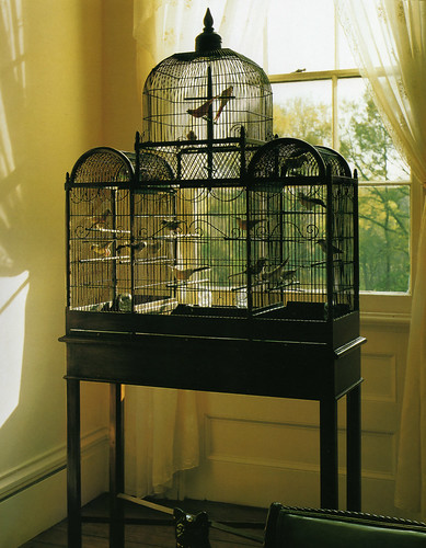 Bird Cage Inspiration