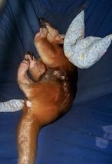 Sleeping Eldorado