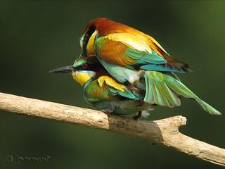 Amor en rama