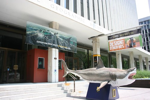Shark at the National Geographic Museum