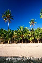Coconut palm trees on a white sand beach; Siargao Island (tommyschultz) Tags: asia southeastasia philippines palmtree beaches tropicalisland whitesand mindanao siargao photooftheday islandbeach tropicalbeach philippineisland