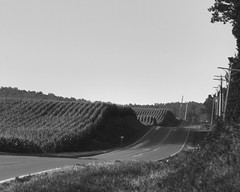 Down a country road (LarryHB) Tags: road bw field rural landscape corn farm country s missouri 2010 semo scottcounty 2010lhb