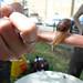 daniel winning snail