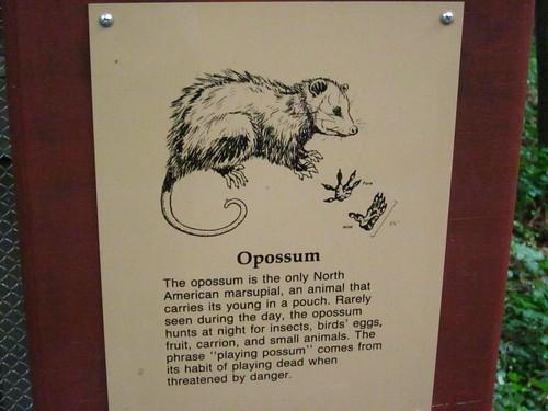 Opossum.