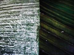 Banana Leaf Comparison