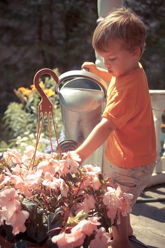499:1000为疯狂的花朵浇水