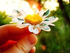 Daisy Ink