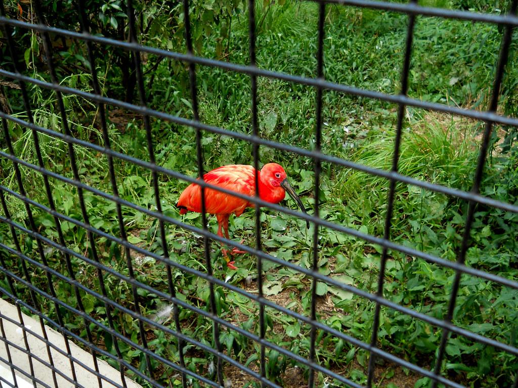 Zoo2010_027