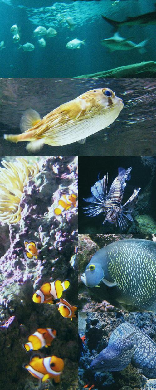 photos des poissons de l'aquarium du Trocadéro