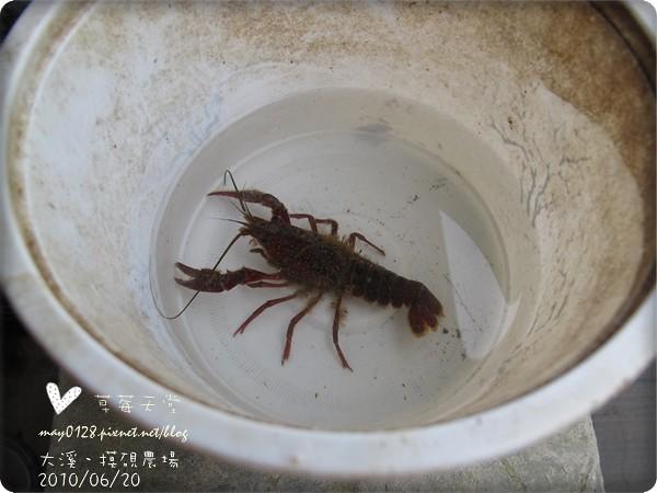 大溪摸硯農場7-2010.06.20