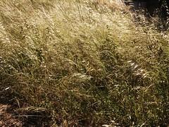 summer  desert (*F~) Tags: africa summer urban hot nature work europe mediterranean desert wind herbs hard urbannature sweat ultraviolet ultra violent desertification iberic ahhrrgh