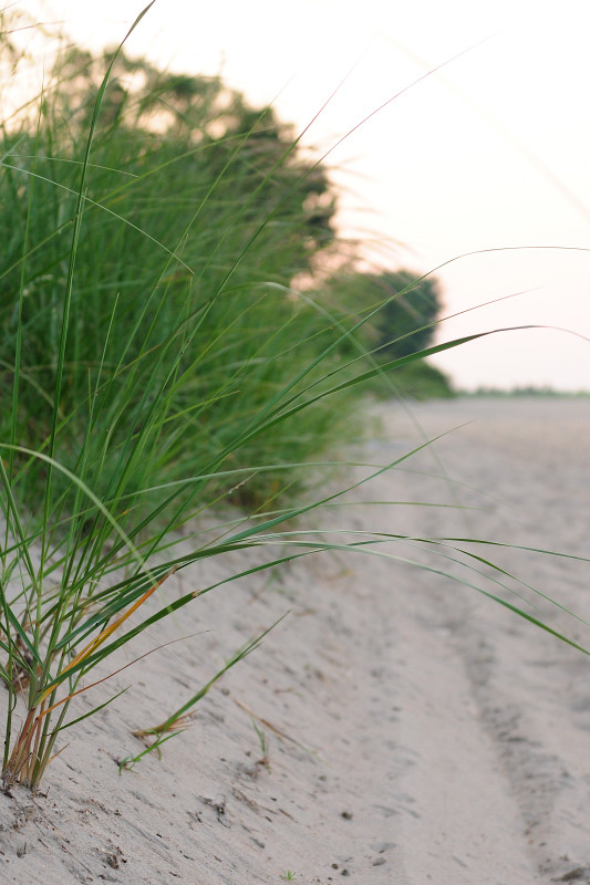 Grass Along the Sand