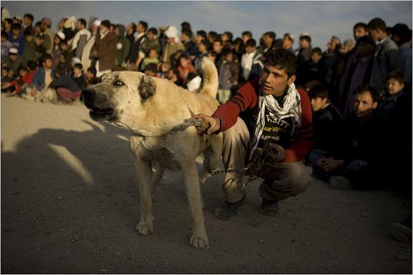 Afghan-dogfighting