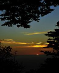 Lands End San Francisco Sunset () Tags: ocean sf sanfrancisco city trees sunset sea orange yellow gold pacific thecity pacificocean landsend op blacksea presidio sfist  ggnra presidioofsanfrancisco saofrancisco sanfranciscosunset oceanpacific