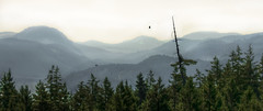 A View from the Malahat