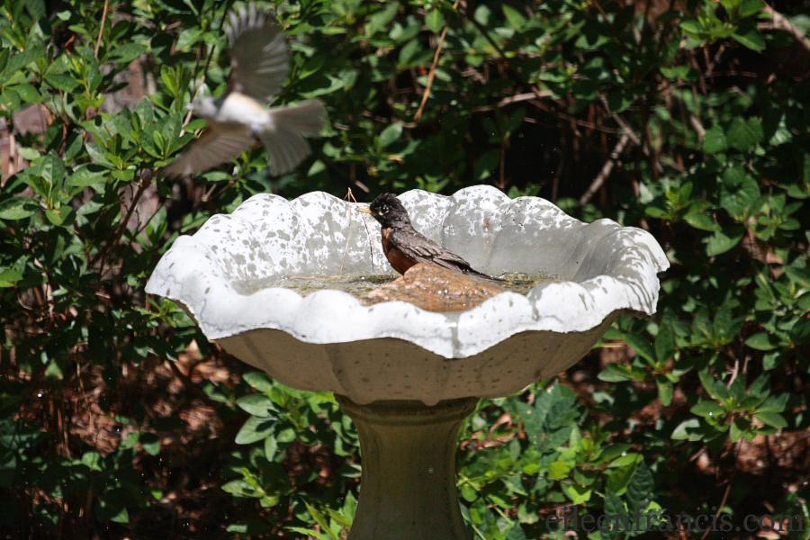 birdbath102 web