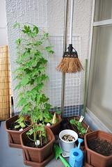 夏の庭2010