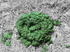 manure (Leeber) Tags: field grass cow crap shit manure dung cowpat