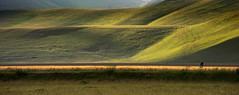 Sezione 3 (Massimo Feliziani) Tags: landscape explore di frontpage montagna paesaggio umbria norcia castelluccio sibillini fioritura
