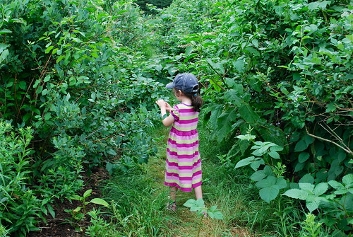 In the blueberry bushes