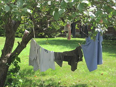 Sugarbaby hung Mr. U's wet laundry outside in the front