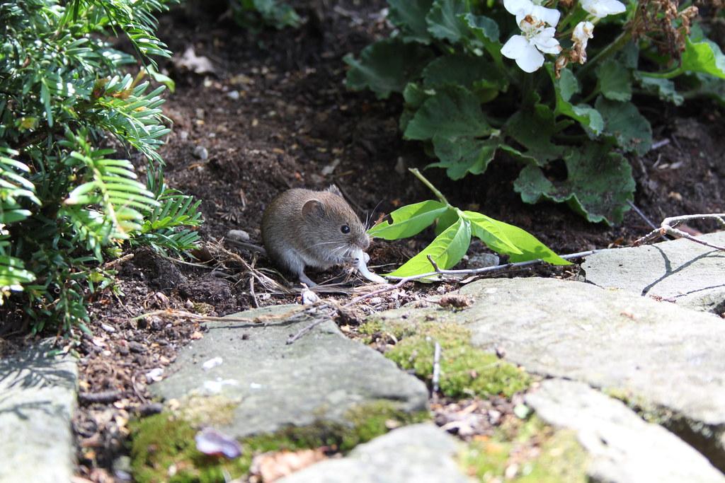 Mice! (2)