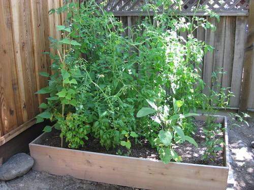 Garden Box Gone Wild