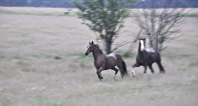 hästar på rymmen