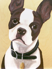 zoe ( Just me... ) Tags: portrait boston painting bostonterrier eyes sad terrier
