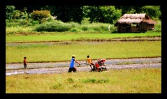 a farmer and also a father (Tiny_Shutterbug) Tags: people rural children father philippines farmer plowing nipahut plantingrice handtractor