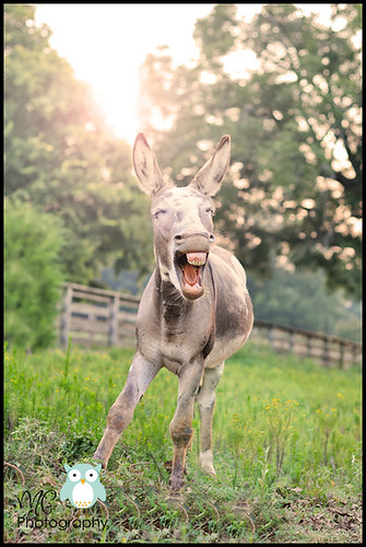 So a donkey walks into a bar and....