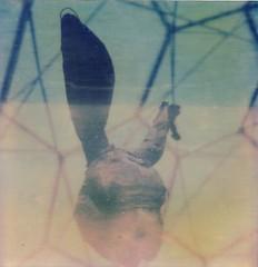 Rabbit head. (caballosblancos) Tags: test rabbit strange polaroid sx70 rabbithead px70 impossibleproject newcolourfilm