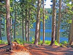 Mason Lake and Trees