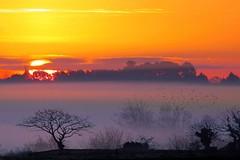 Comme un lundi matin (ctey) Tags: sunset sunrise landscape paysage brume thegalaxy bestcapturesaoi bestofmywinners mygearandmepremium mygearandmebronze mygearandmesilver mygearandmegold passiondclic mygearandmediamond mygearandmeplatinium
