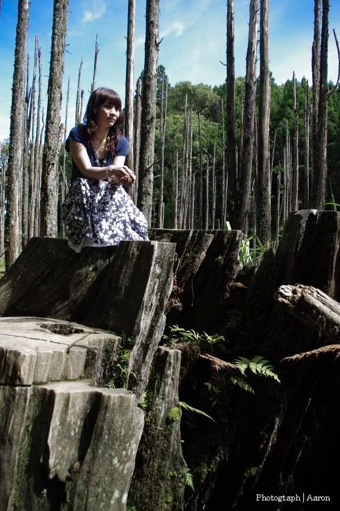 忘憂森林│我家女王