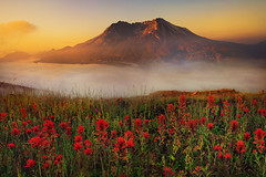 Mt.St.Helens Sunrise (kevin mcneal) Tags: mountains sunrise bravo pacificnorthwest wildflowers indianpaintbrush mountsainthelens colorphotoaward bratanesque passiondclic