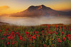 Mt.St.Helens Sunrise (kevin mcneal) Tags: mountains sunrise bravo pacificnorthwest wildflowers indianpaintbrush mountsainthelens colorphotoaward bratanesque passiondéclic