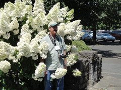 Naughty Man with Hydrangea paniculata 'Unique'