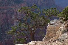 baudchon-baluchon-grand-canyon-6441240710