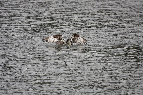 osprey dave harper oakley