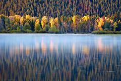 Aspen Splashes (Leviathor) Tags: park travel autumn usa mountains reflection fall nature water fog pine river fallcolors snakeriver wyoming aspen grandtetonnationalpark oxbowbend roadtrip2009