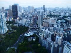 Tokyo 2010 - 芝公園 - 東京タワー(6)