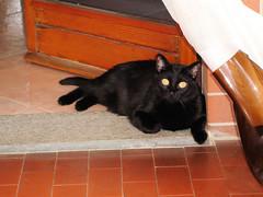 LILLI la diavoletta di casa (lufial) Tags: gatti
