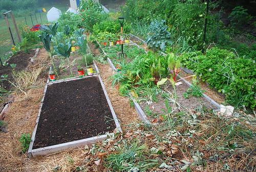 Messy Garden 1