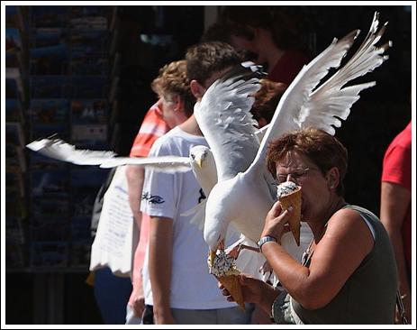 Seagulls-9