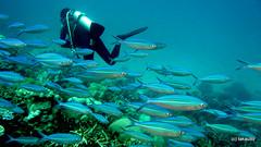Trinla Reef, Thailand