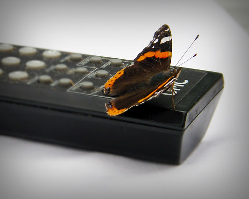 Day 76 - Butterfly Remote