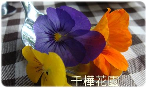 【下午茶時光】貴婦花園下午茶在環境很美的千樺@ 台中