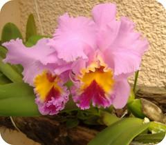 Feliz dia de Flor ... (Joana Joaninha) Tags: flor rosa quinta joanajoaninha