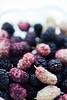 mulberries (ion-bogdan dumitrescu) Tags: summer fruits childhood fruit child sunny fresh dude ruby ripe mulberry mulberries dud bitzi morusalba morusnigra ibdp mg4426 ibdpro wwwibdpro ionbogdandumitrescuphotography